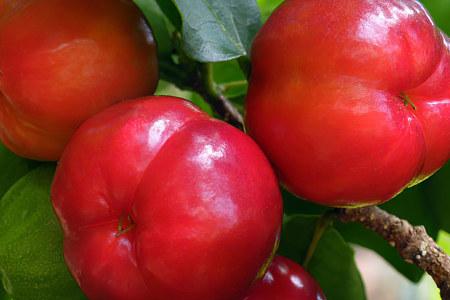Propiedades beneficiosas de las cerezas de Barbados
